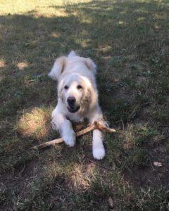 Norman, cane guida di Vittoriano
